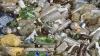 В Криулянском районе молодежь очищала пойму Днестра