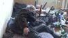 Нечистоплотный сосед превратил жизнь жильцов бельцкой многоэтажки в ад