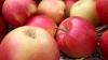 В Агентстве продовольственной безопасности начато внутреннее расследование