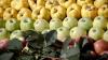 Молдавскую продукцию запретили ввозить в Россию через Белоруссию