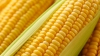 Что почём: в Молдове открыт сезон варёной кукурузы