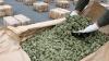 Банда наркоторговцев раскрыта в Кагульском районе