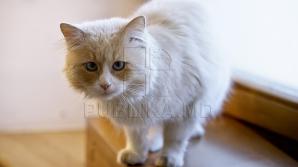 Британскую кошку случайно отправили посылкой