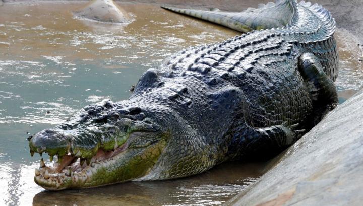 Во Флориде аллигатор украл арбуз (ФОТО)