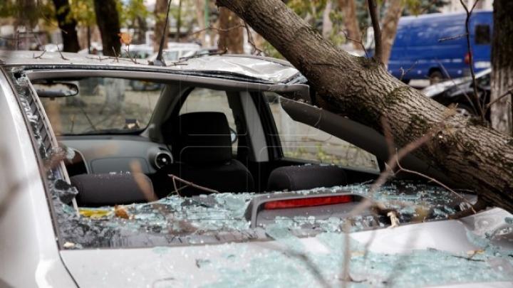 Старое дерево рухнуло на легковой автомобиль в Кишиневе