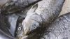 После скандала с червивой рыбой главу лаборатории Центра ветеринарной диагностики отстранили от должности