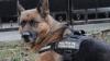 В столичном аэропорту служебный пес общался с пассажирами и желал им Светлой Пасхи