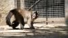 В столичном зоопарке появились на свет три детёныша кенгуру и малыш обезьяны-игрунки