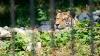 В барнаульском зоопарке тигр напал на ребенка