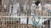 Скандал в Бульбоаке: администратора кладбища обвиняют в вымогательстве