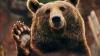 """Музыкантам египетского президентского оркестра """"медведь наступил на ухо"""" (ВИДЕО)"""