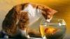 Коты помогают хозяину вытаскивать рыбу из сетей (ВИДЕО)