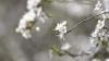 Предупреждение синоптиков: по ночам в Молдове будет подмораживать до минус 5 градусов