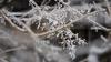 Самая холодная ночь: в Молдове зарегистрировали морозы ниже 20 градусов
