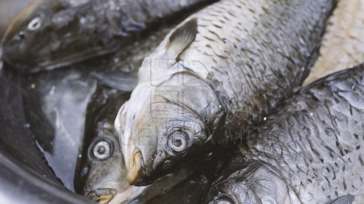 В Черном море затонуло судно с 30 тоннами рыбы