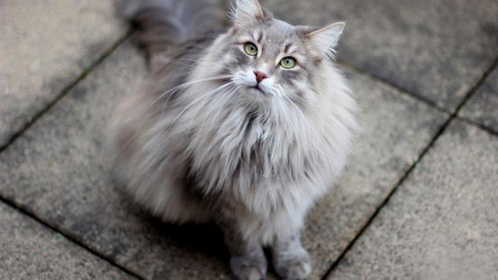 В Риме планируют трудоустроить полмиллиона кошек для борьбы с крысами