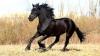 Самый красивый и грациозный конь в мире живёт в США