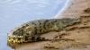 Австралийский пенсионер отбился от крокодилов свечами зажигания