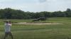 Огромный аллигатор распугал гольфистов (ВИДЕО)
