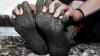 Фермер из Великобритании изобрел носки, которые не требуют стирки