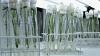 В Молдове появилась первая лаборатория по определению ГМО в продуктах