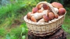 По грибы с удачей ходят: как распознать признаки отравления