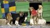 """Защитники животных спасли дворнягу, оказавшуюся в """"плену"""" пластиковой бутылки"""