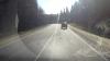 «Так-то мы очень добрые люди»: водитель протащил привязанного к машине пса по дороге