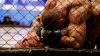 В конце мая в Кишиневе состоится турнир по смешанным боевым искусствам Eagles Fighting Championship