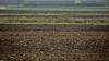 Фермеры и Минсельхоз сильно разошлись в предварительных оценках убытков от заморозков