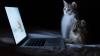 Ученые: использование ноутбуков по ночам приводит к ожирению