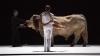 В Испании требуют запретить оперу с участием живого быка