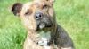 От самой одинокой собаки в мире отказались 18 тысяч раз