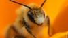 20-тысячный пчелиный рой двое суток преследовал британца