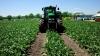 Премьер-министр поощряет инвестиции в сахарную промышленность Молдовы