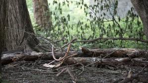 Сильный ветер «похоронил» BMW под деревом (ФОТО)