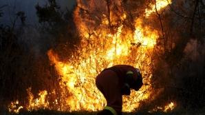 Ущерб от лесных пожаров в канадской Альберте превысил семь млрд долларов