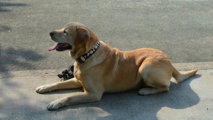 Таможенный пес Дунай помог обнаружить контрабанду сигарет в молдавском микроавтобусе