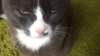 Коты высказались против выхода Великобритании из ЕС (ФОТО)