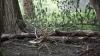 На Буюканах рухнувшее дерево повалило столб с проводами