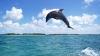 В Намибии мужчина прославился после спасения дельфина (ВИДЕО)