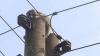 В Германии третий день не могут снять енота с электрического столба