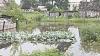 В селе Гидигич затопило дачный кооператив, люди жалуются на потерю урожая