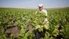 Власти выделят больше средств для стартапов в сельском хозяйстве