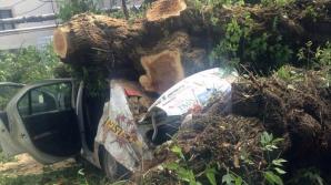 Упавшее дерево раздавило машину в столице (ФОТО)