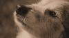 Пустые обещания о приюте: отловленных в Бельцах собак спасают от голодной смерти