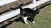 Инженер Nvidia придумал, как отучить котов метить территорию