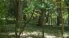 В леса Хынчештского района выпустили полторы тысячи птенцов фазана