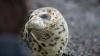 На Сахалине дети до смерти забили детеныша тюленя