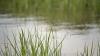 Фермеры смогут использовать воду из озёр для орошения сельхозугодий